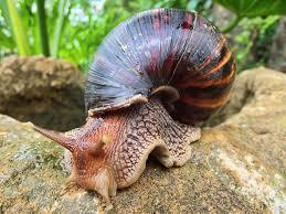 Snail Farming –